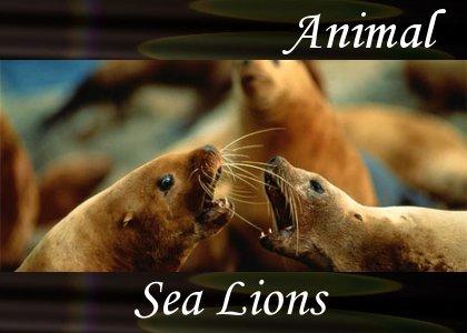SoundScenes - Atmo-Animal - Sea Lions