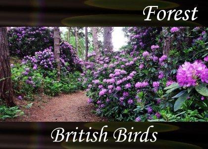 SoundScenes - Atmo-Forests - British Birds 1
