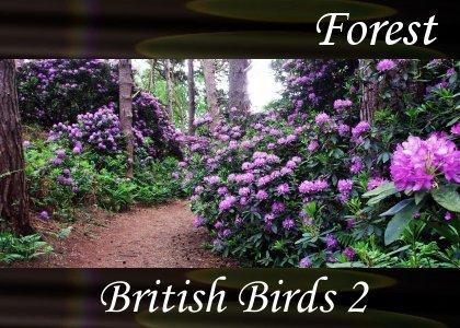 SoundScenes - Atmo-Forests - British Birds 2