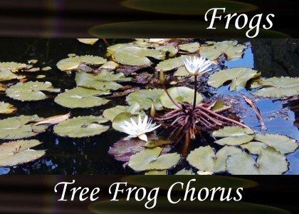SoundScenes - Atmo-Frogs - Tree Frog Chorus