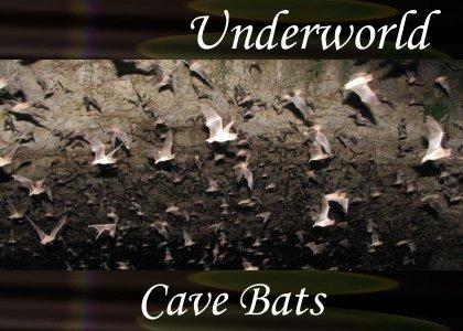 SoundScenes - Atmo-Underworld - Cave Bats