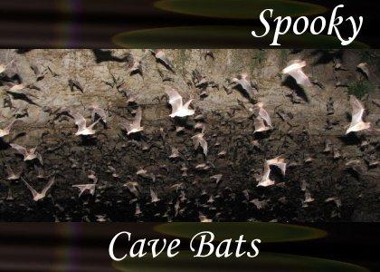 SoundScenes - Atmo-Dark - Cave Bats